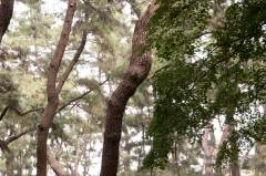 Forêt de Gyerim