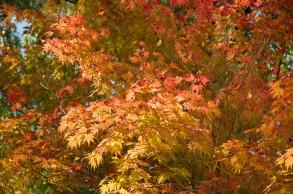L'automne à Dosan Seowon
