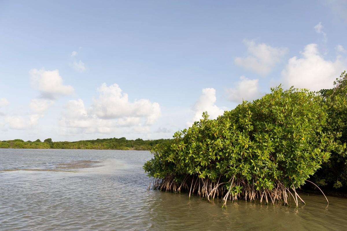 Etang des Salines et sa mangrove