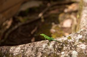 Martinique- Jardin de Balata