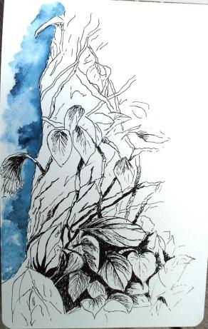 Croquis à l'encre de chine et aquarelle-Martinique- Jardin de Balata